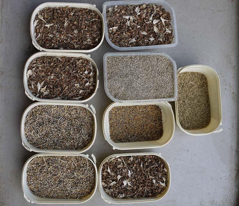 Prélèvement de graines