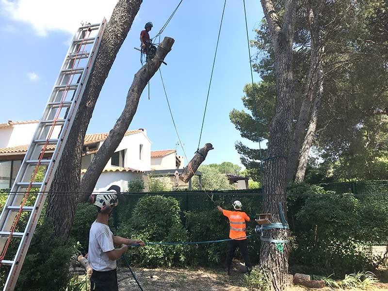 Abattage délicat d'un arbre