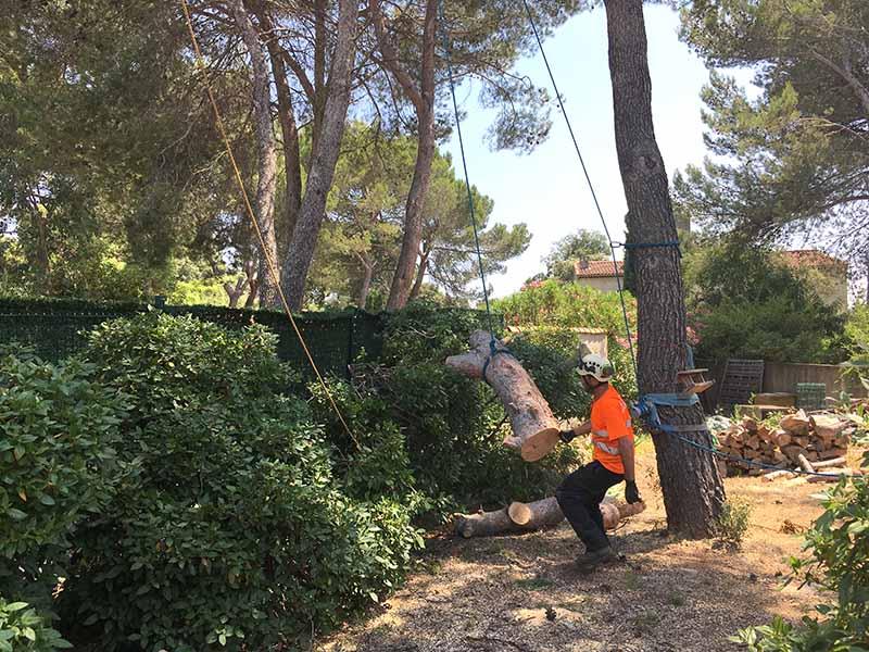Abattage délicat d'un arbre par rétention